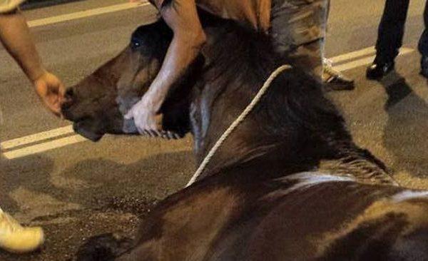 cavall-sacrificat-Barcelona-FACEBOOK-FAADA_1412868862_3075368_651x366